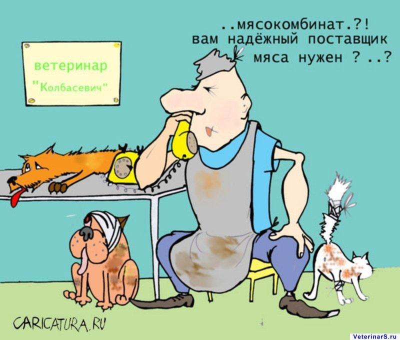 ветеринарный юмор картинки миниатюрной