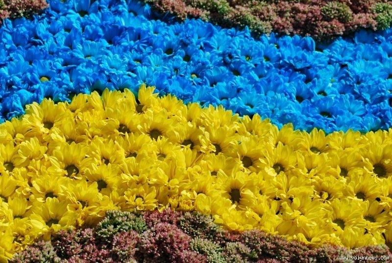 На святі квітів луцьк квітучий яке
