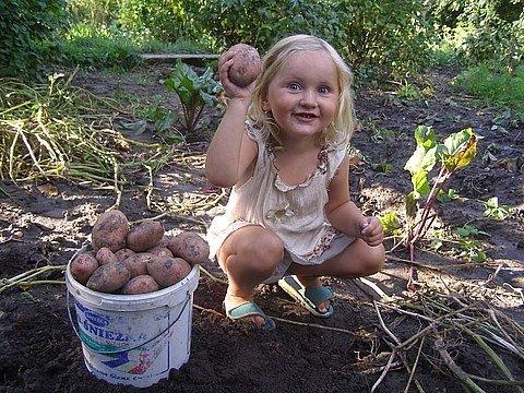 Здорово бабуля картошку сажаю 120