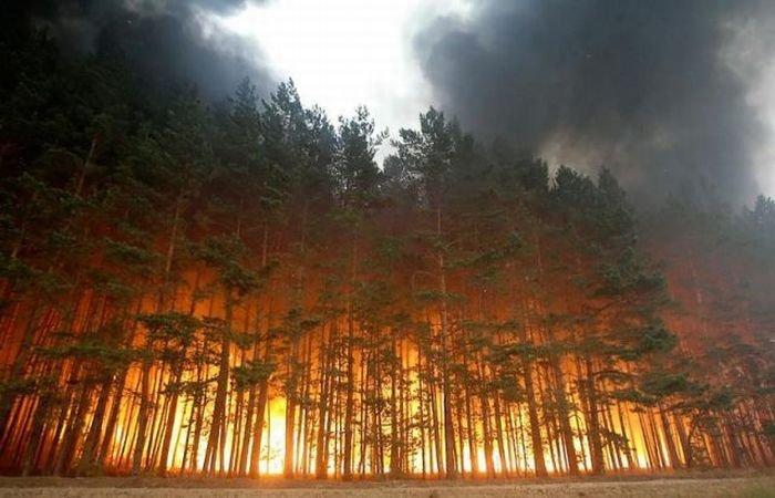"""Результат пошуку зображень за запитом """"пожежі в лісі"""""""