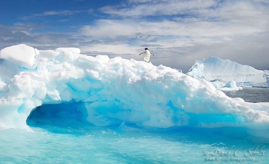 Арктика с картинками