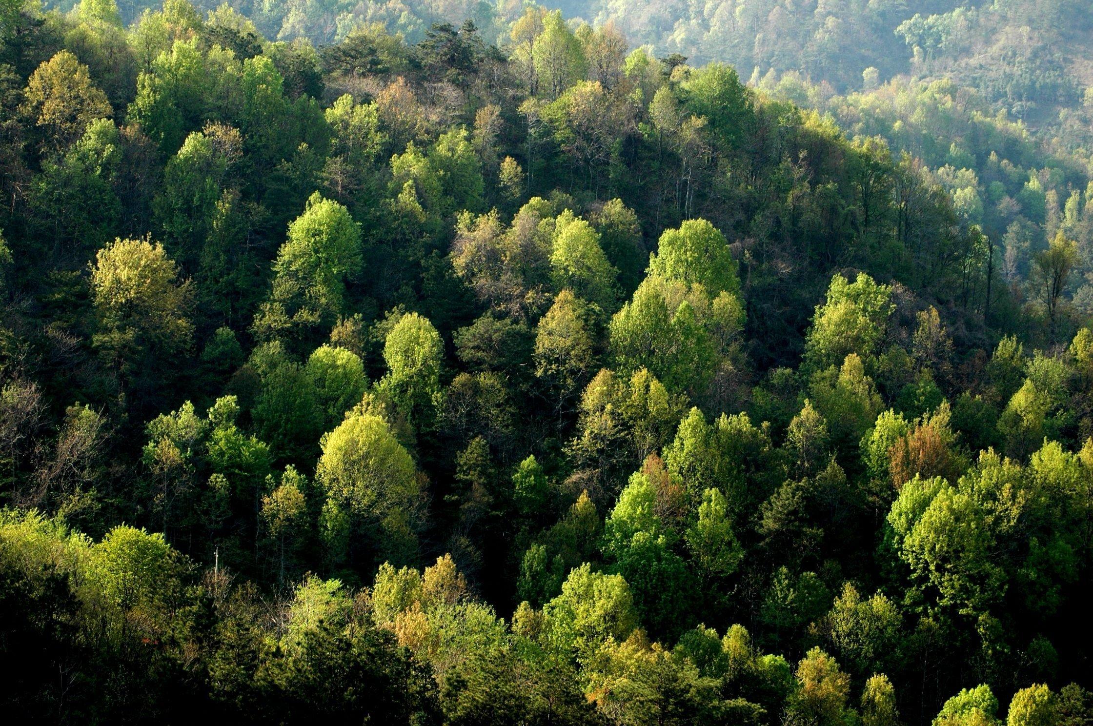 На Закарпатті перевірять законність вирубки лісів