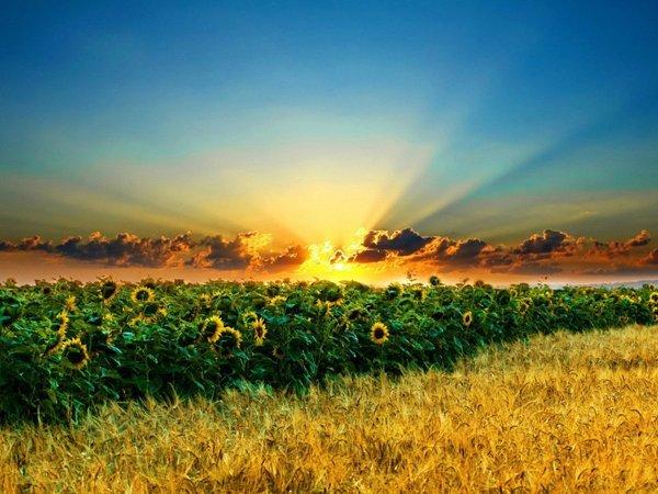 """Результат пошуку зображень за запитом """"сільське господарство"""""""