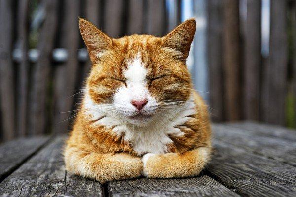 Benefits of neutering a cat