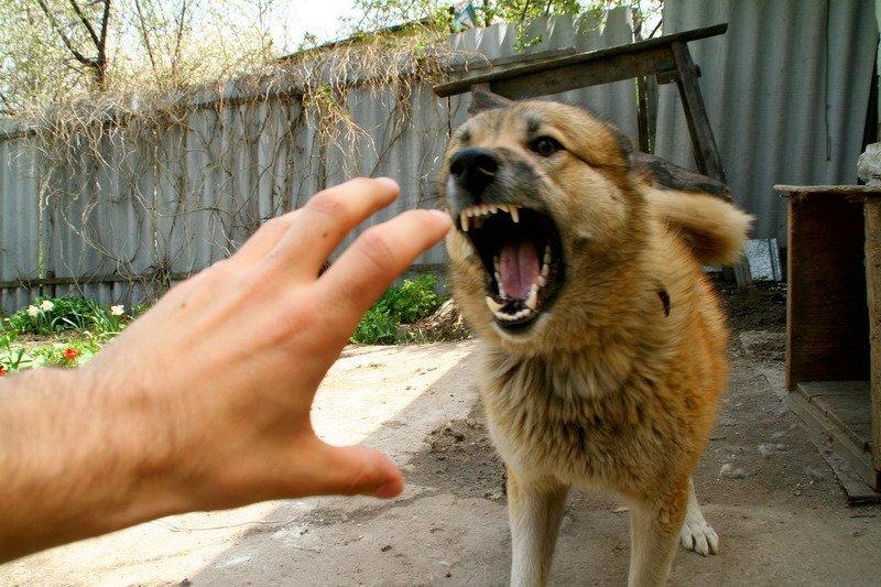 У селі на Рожнятівщині виявили скаженого собаку