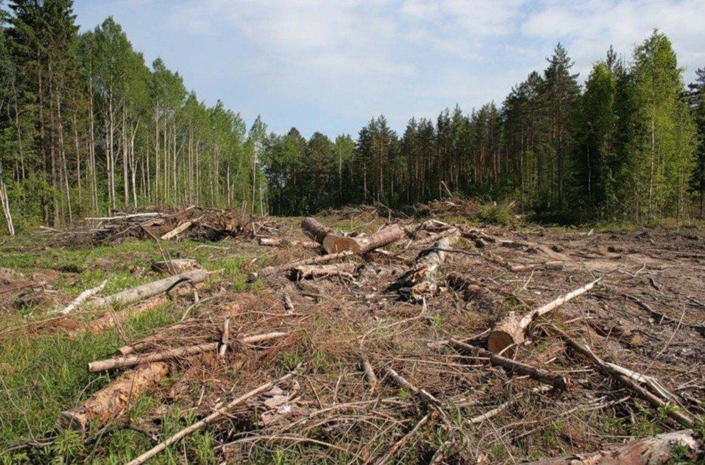 На Косівщині прокуратура передала до суду ще три справи щодо порубки лісу