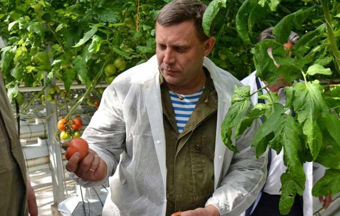 Захарченко наказав вилучити врожай, вирощений на«самовільно використаних земельних ділянках»