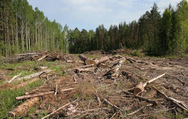 На Косівщині громадські активісти борються з незаконною масовою вирубкою лісу (відеосюжет)