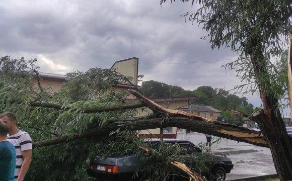 У Горохові буревій повалив дерева та порозкривав будинки. Відео