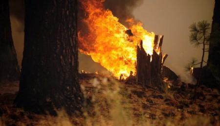 В Анталії спалахнули лісові пожежі, підозрюють навмисний підпал