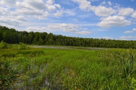 Оспіване Лесею Українкою в «Лісовій пісні» волинське озеро може зникнути назавжди