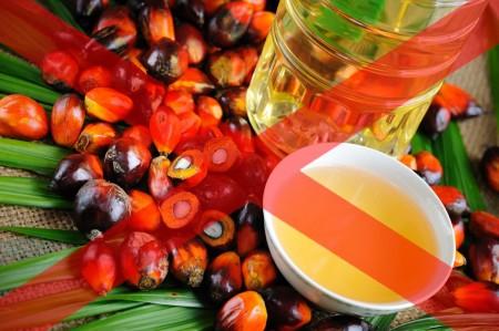 В Україні вирішили заборонити пальмову олію: з яких продуктів вона зникне повністю