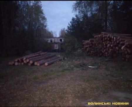 На Ковельщині незаконно рубають ліс на території колишньої військової частини. Фото, відео - volynfeed.com