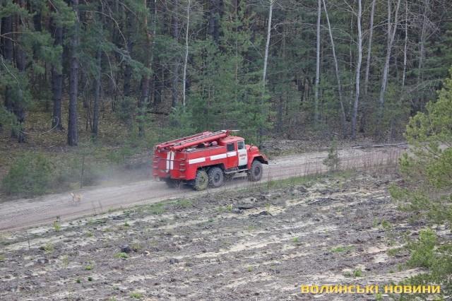 Загорання лісу оперативно гасять