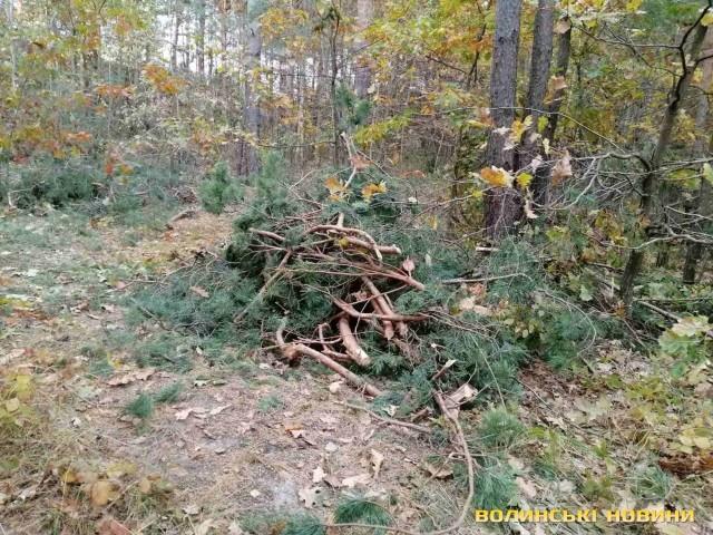 На Ковельщині незаконно рубають ліс на території колишньої військової частини. Фото, відео